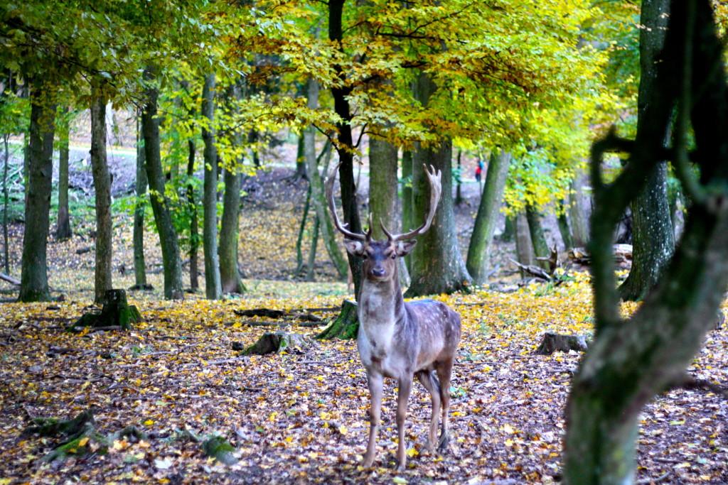WildparkErnstbrunn11