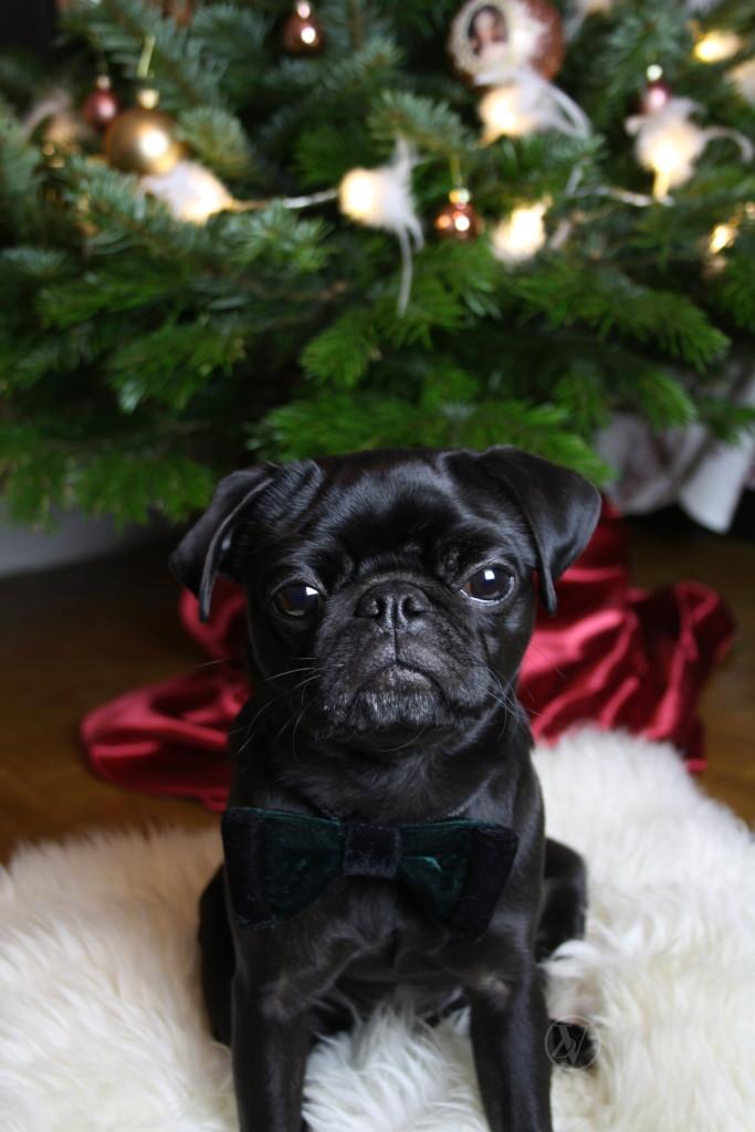 Pug_Christmas